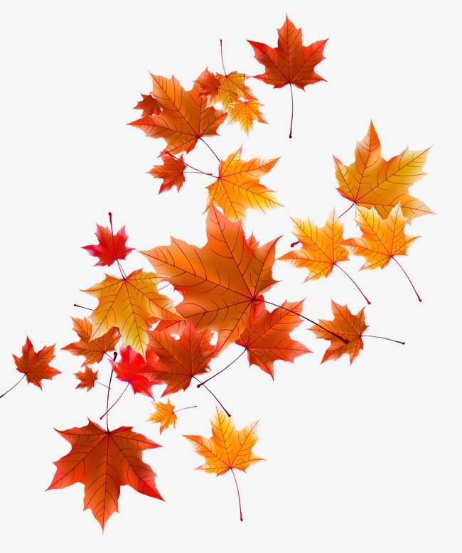 Download Free png Autumn Leaves, Fall, Defoliation, Autumn.