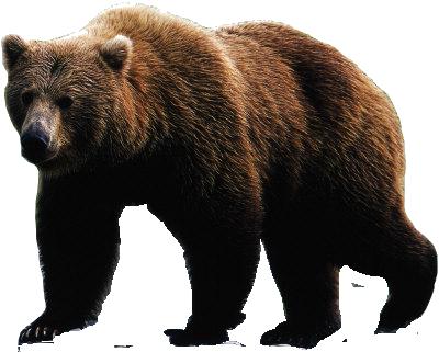 Bear PNG Transparent Bear.PNG Images..