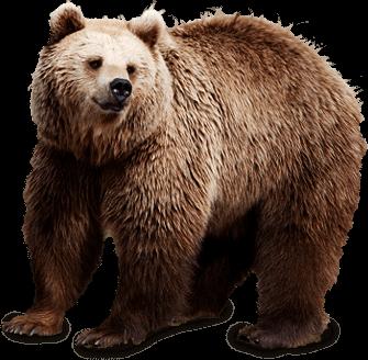 Brown Bear transparent PNG.