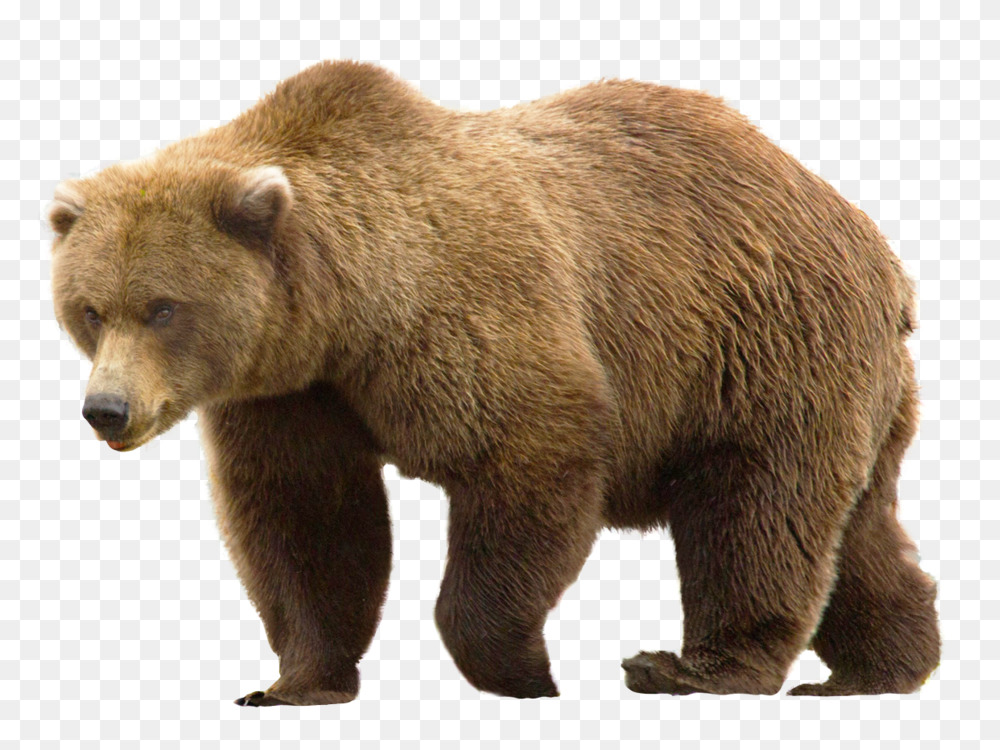Grizzly Bear Png , (+) Png Group.