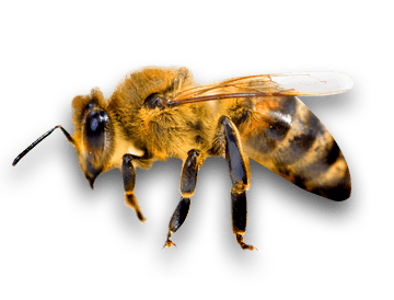 Side Bee transparent PNG.