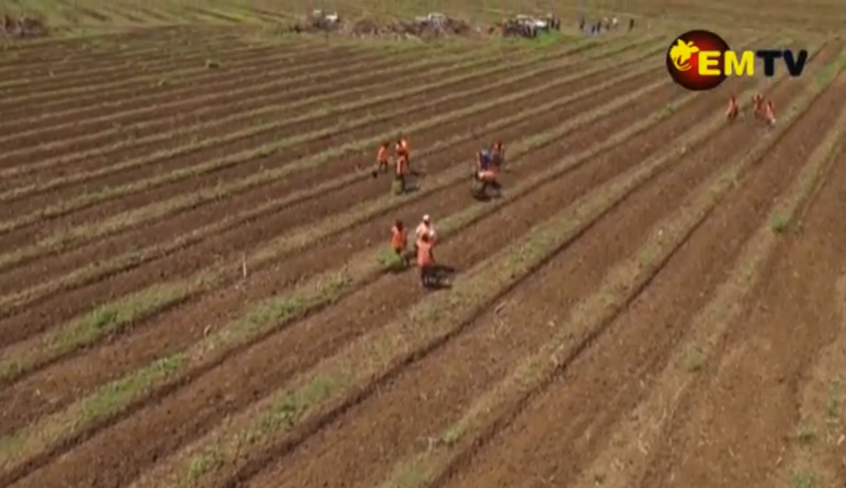 PNG Biomass Developing Tree Plantations to Provide Renewable.