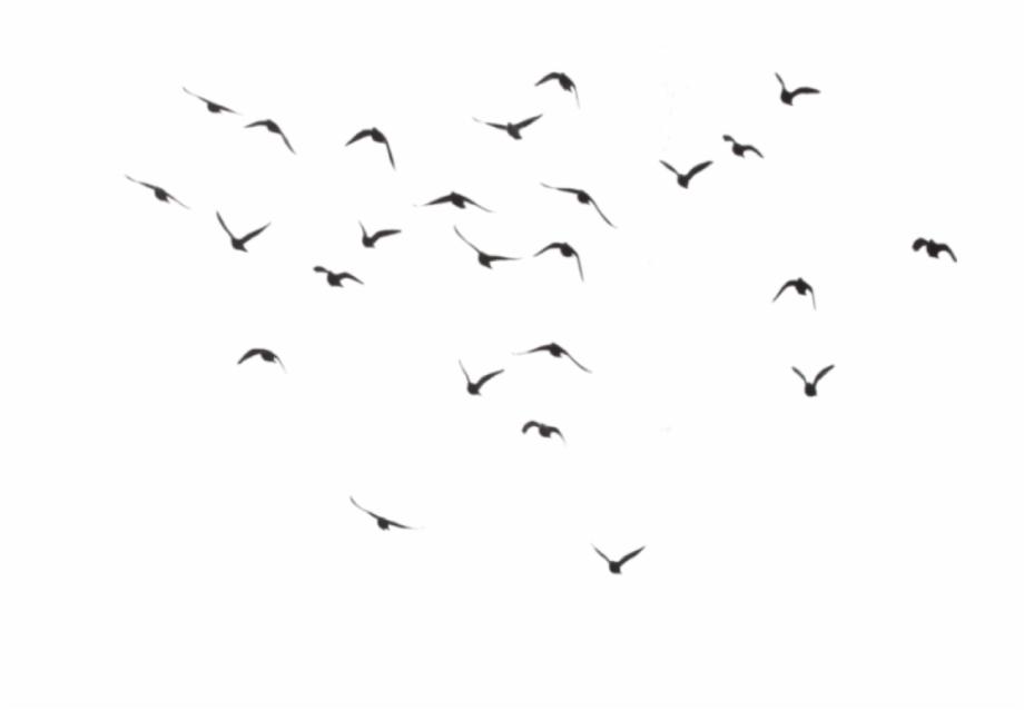 Birds Flying Away Tattoo Tumblr.