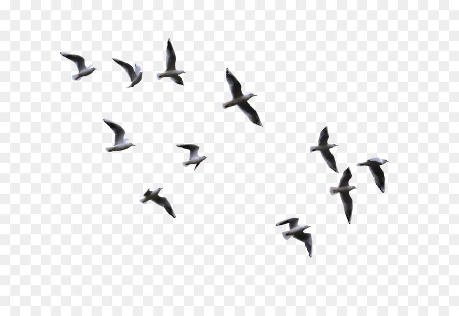 Bird Flight Gulls.