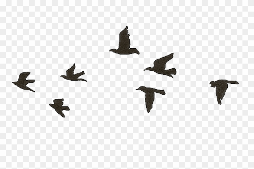 Free Png Download Flying Birds Gif Transparent Png.