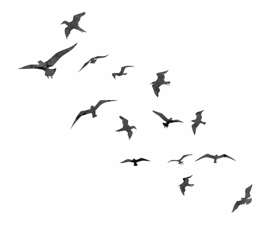 Birds Png Transparent Library.