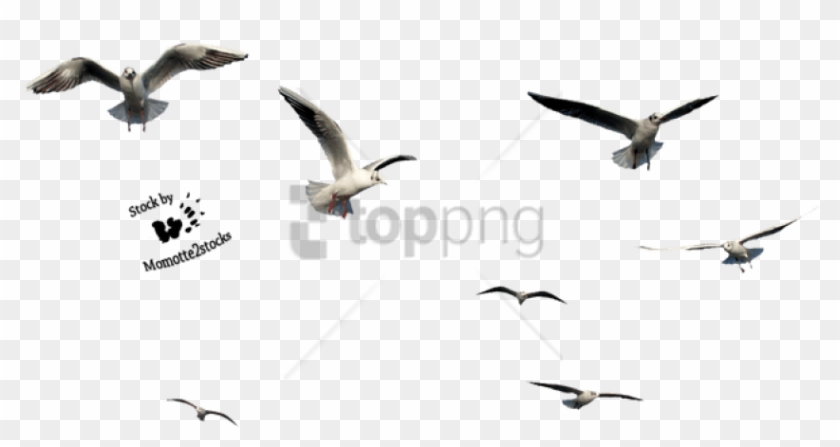 Free Png Birds Cut Out Png Image With Transparent Background.