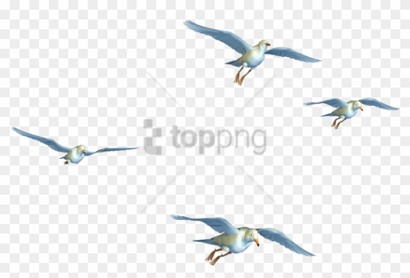 Free Png Flying Birds Images Png Image With Transparent.