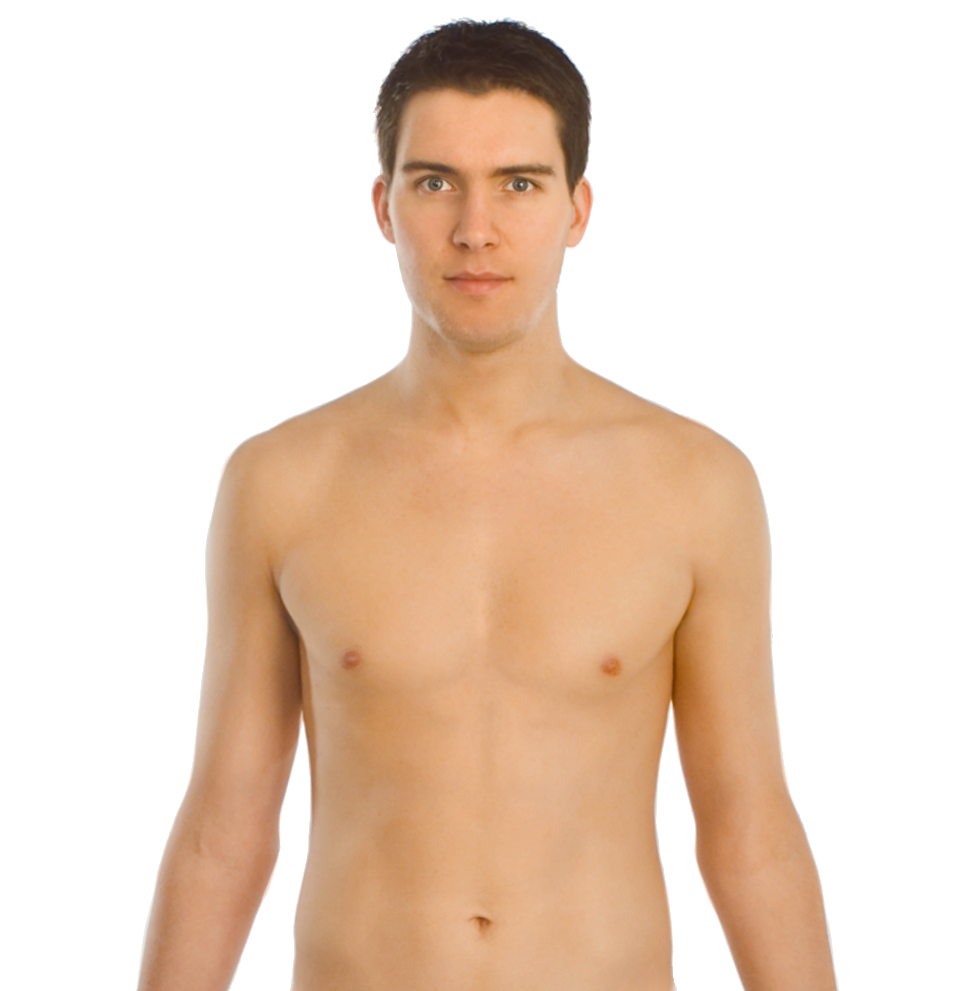 File:Upper body front.png.