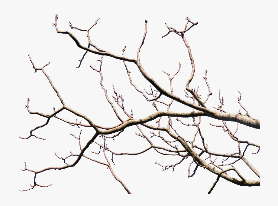 Branch Transparent Black Tree.