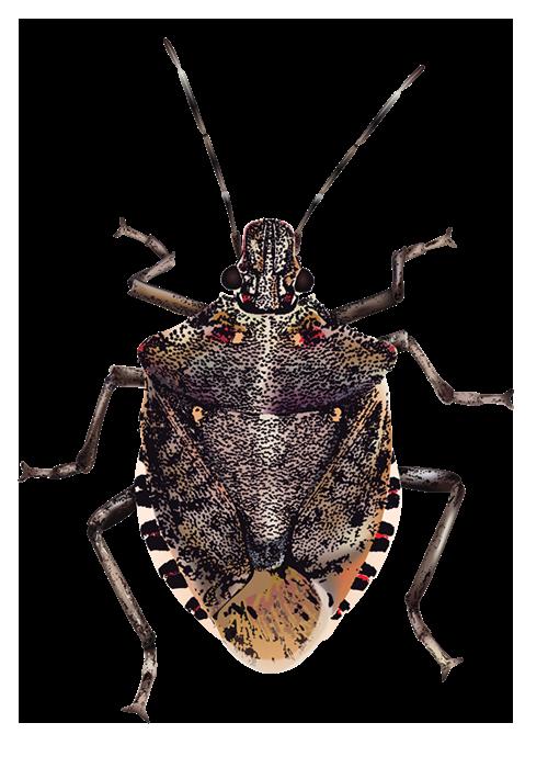 Download Bugs Transparent Background HQ PNG Image.