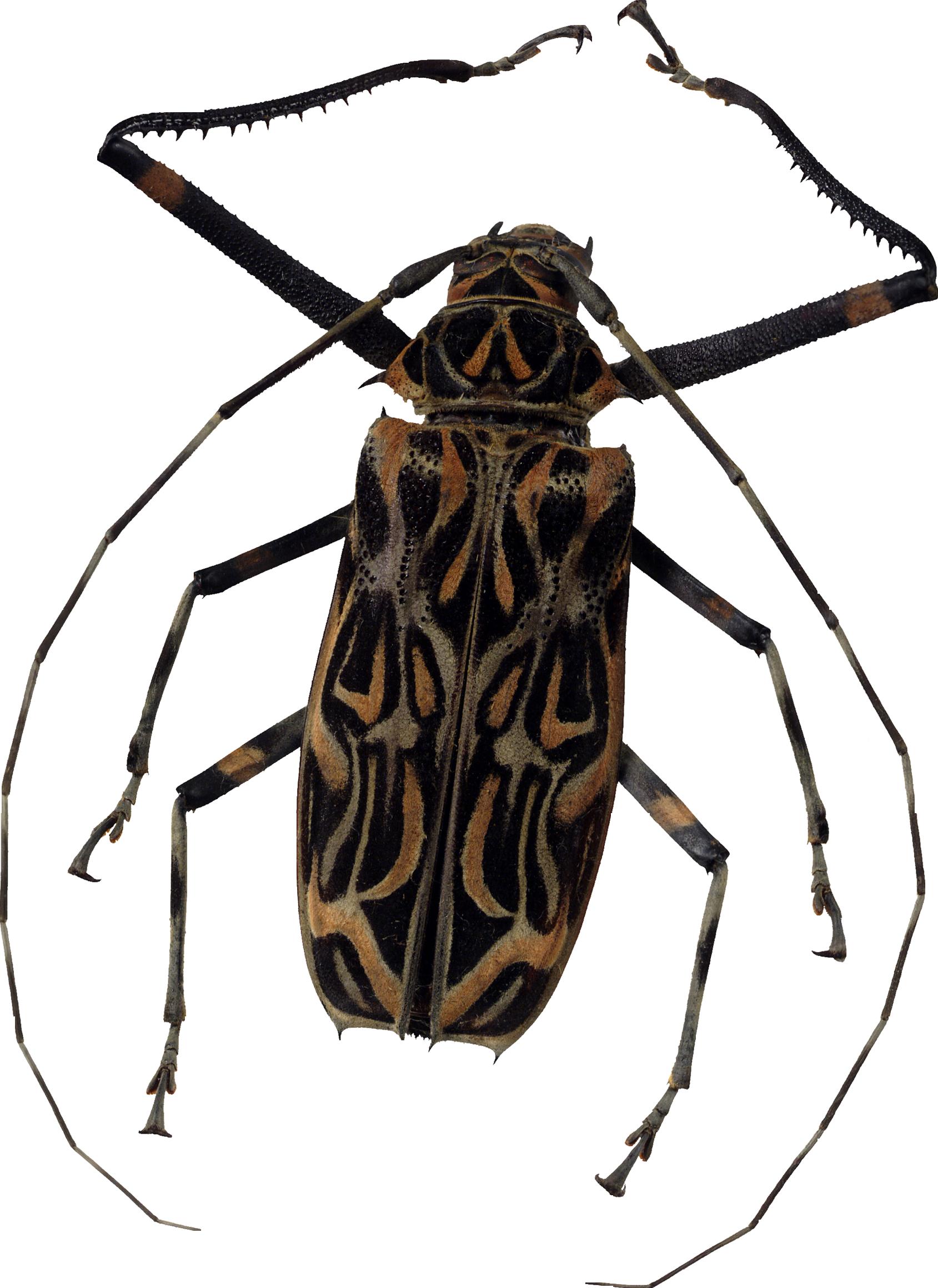 Bug PNG Image.
