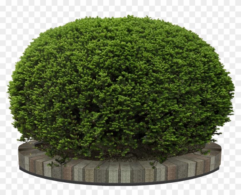 Garden Flower Bush Png, Transparent Png.