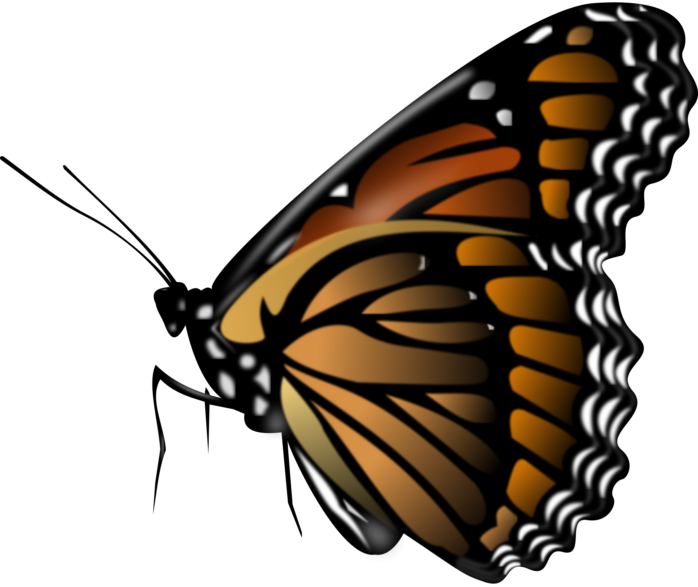 Butterfly HD PNG Transparent Butterfly HD.PNG Images..