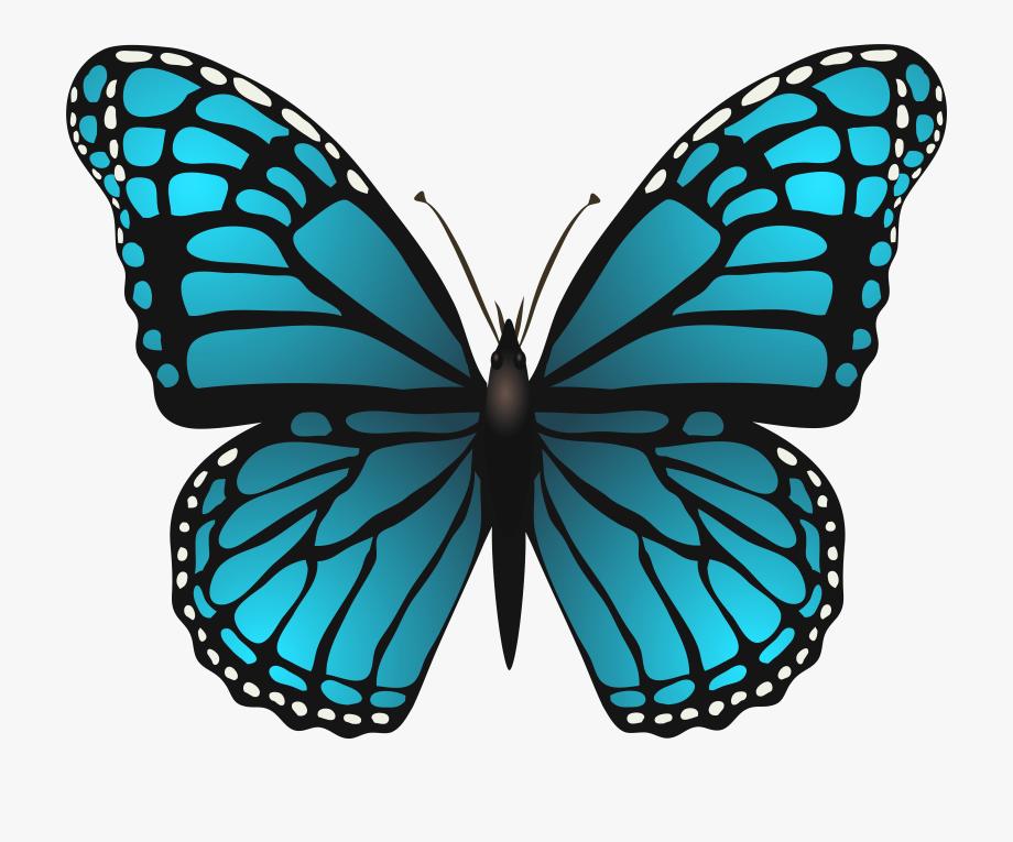 Butterflies Png Transparent.