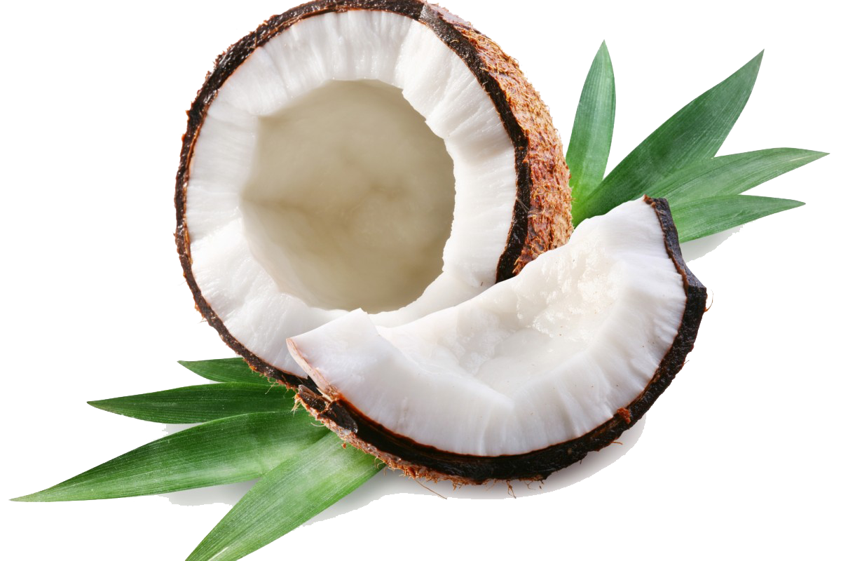 Coconut PNG Transparent Images.