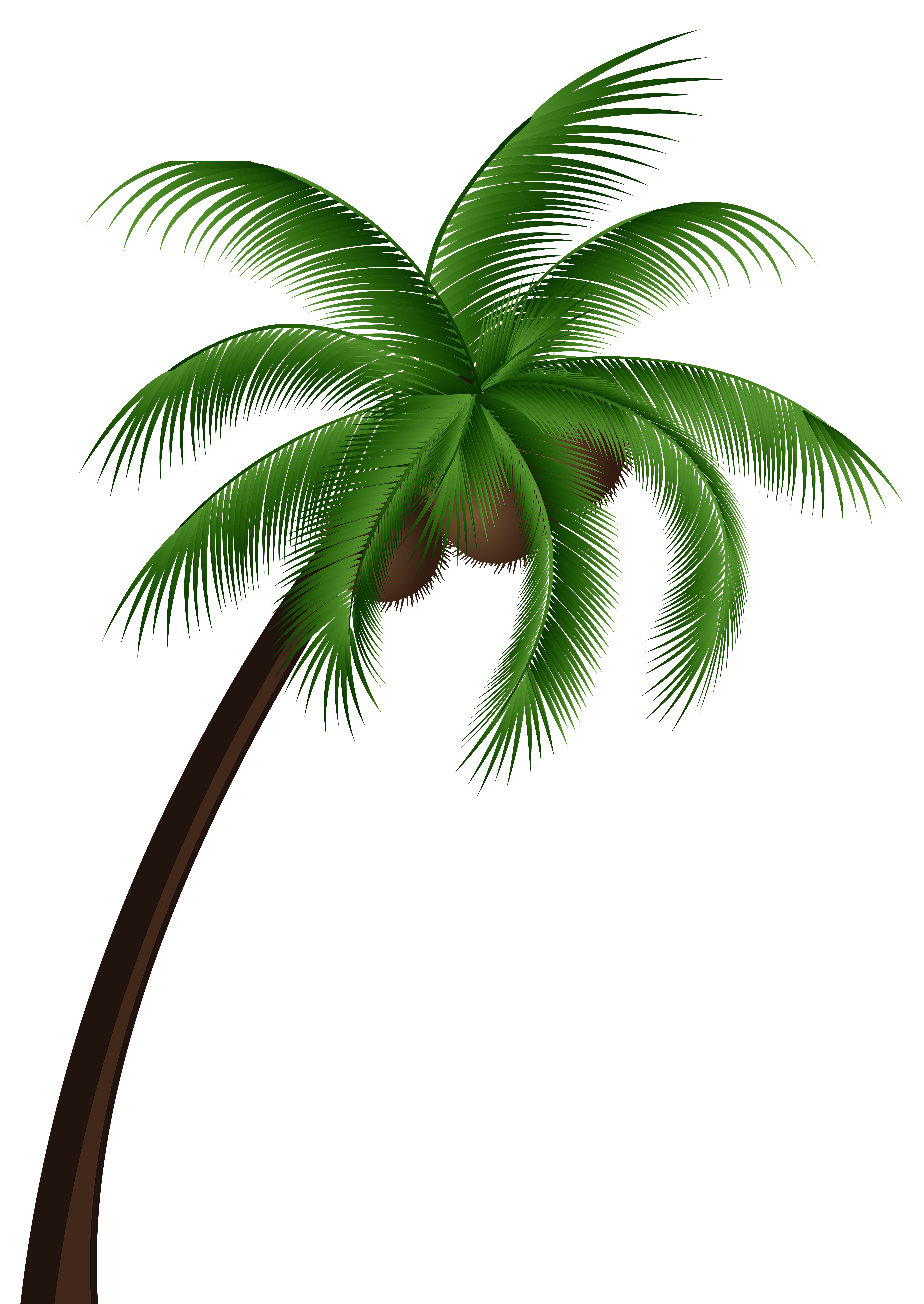 Coconut Palm Tree PNG Clip Art.