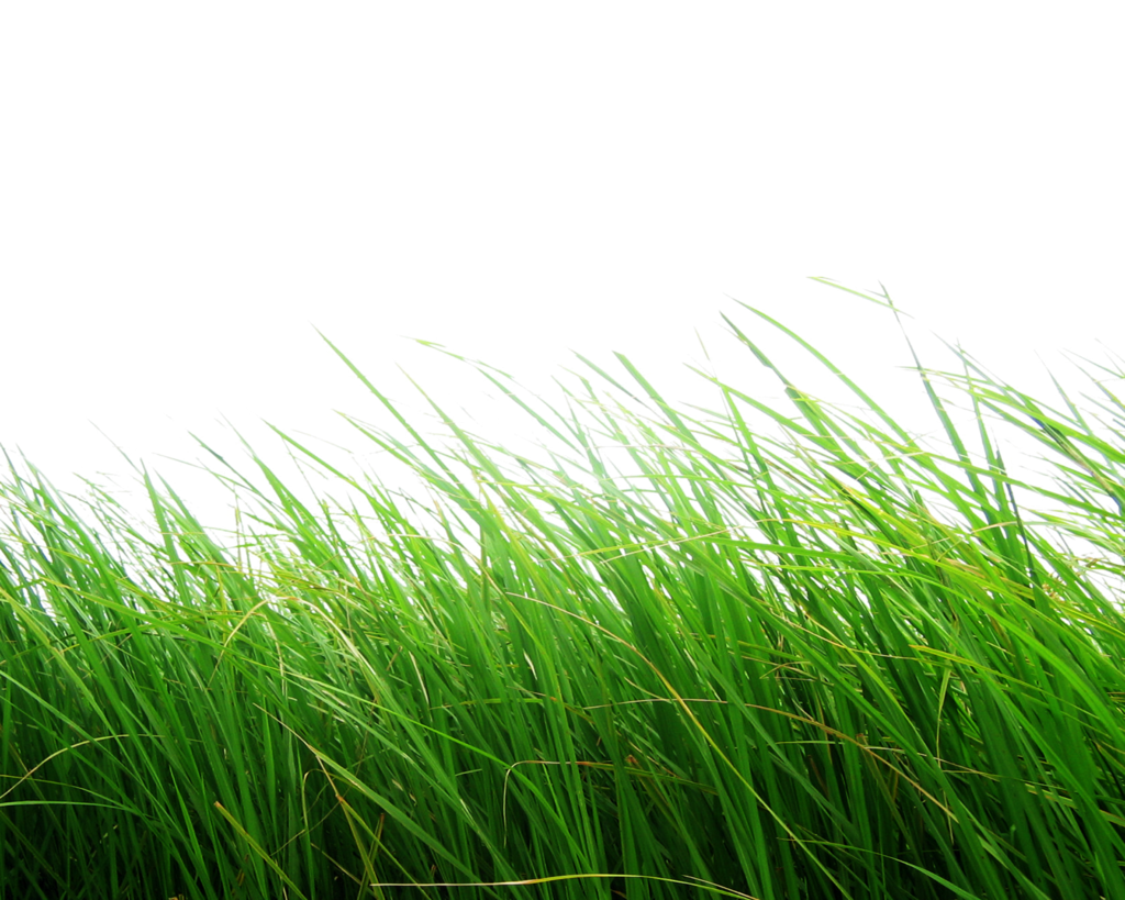 Grass HD PNG Transparent Grass HD.PNG Images..