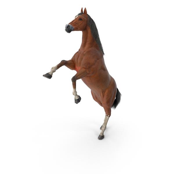 Horse PNG Images & PSDs for Download.