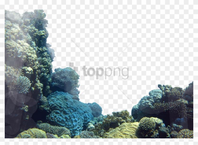 Free Png Corals Png Png Images Transparent.