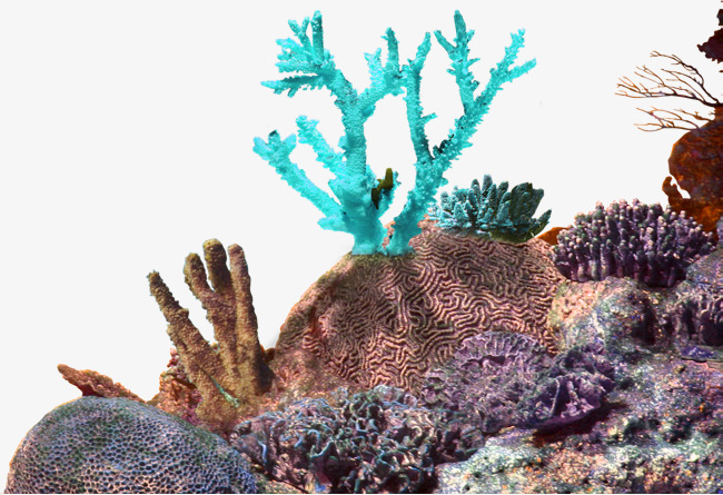 Simple Coral Reef PNG Transparent Simple Coral Reef.PNG.