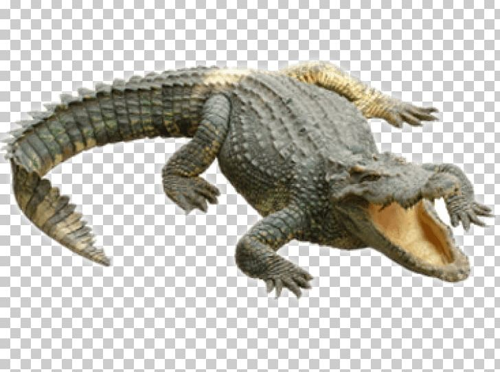 Crocodiles Alligators PNG, Clipart, Alligator, Alligators.