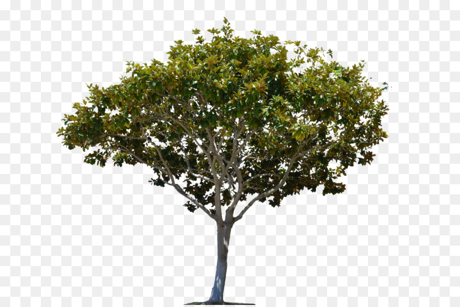 Tree Stock footage Alpha compositing High.