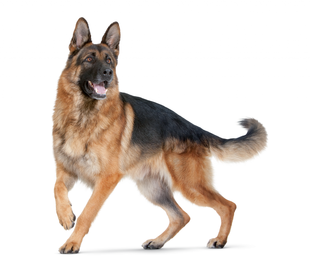 PNG HD Dogs Transparent HD Dogs.PNG Images..