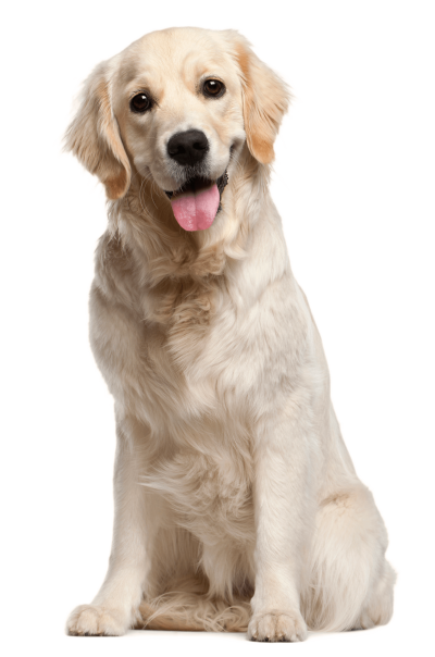 Download DOG Free PNG transparent image and clipart.