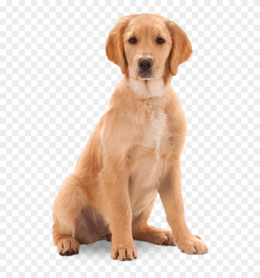 Harringtons Dog.