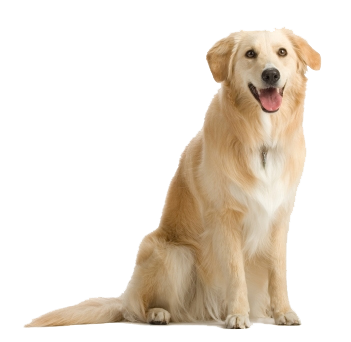 Dog PNG 7.