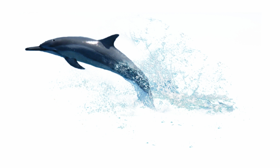Dolphin Png Photo Water.