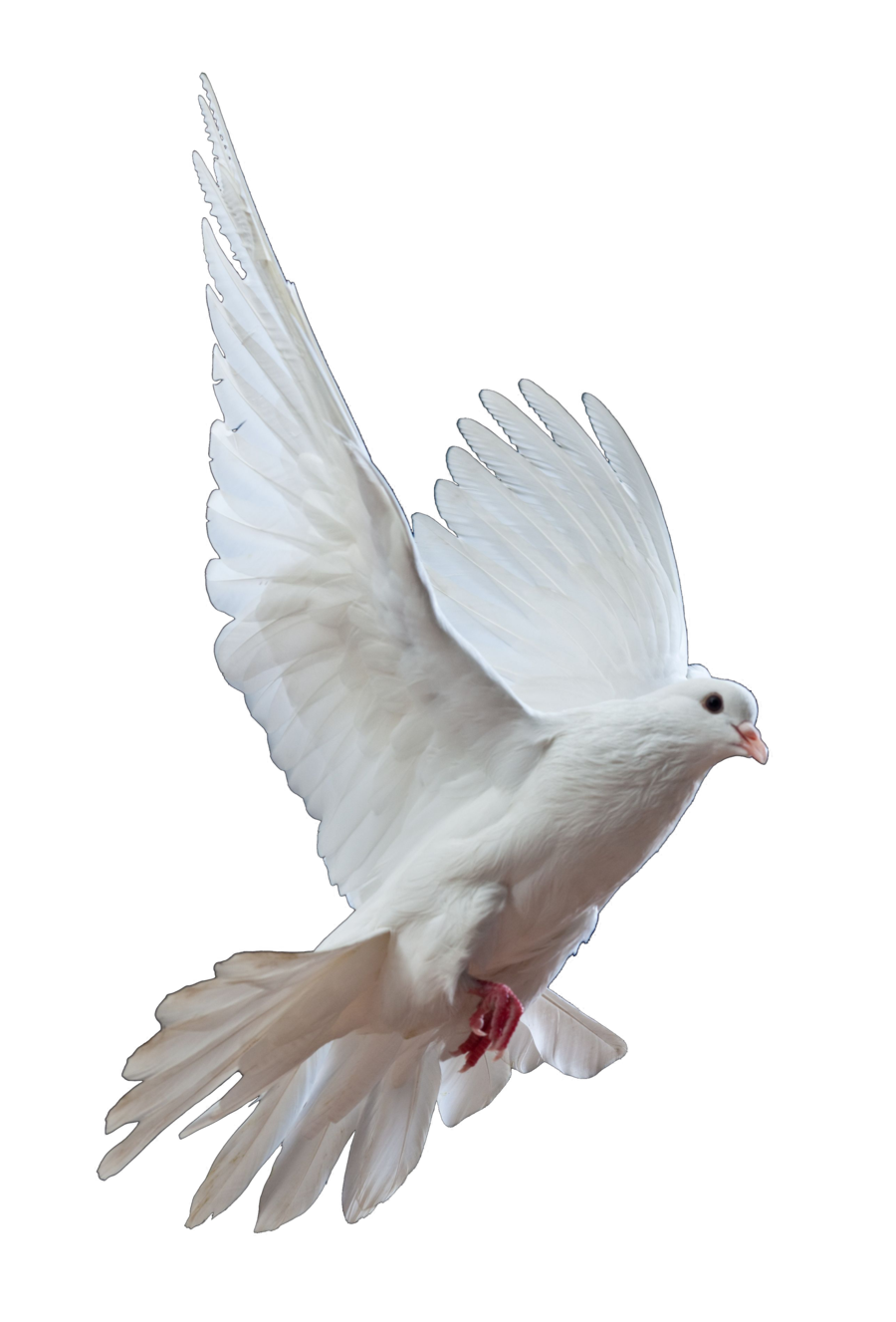 Dove PNG Transparent Dove.PNG Images..