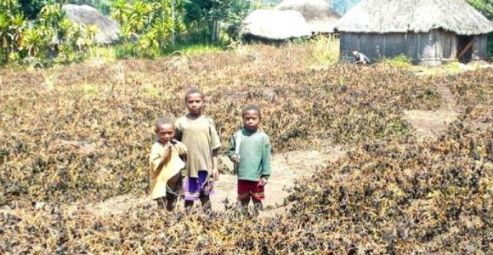 Papua New Guinea drought still affecting economy, in spite.