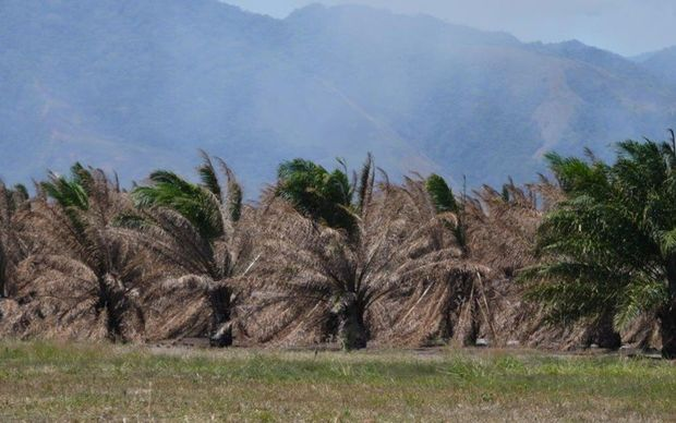 More food aid planned for PNG drought zones.