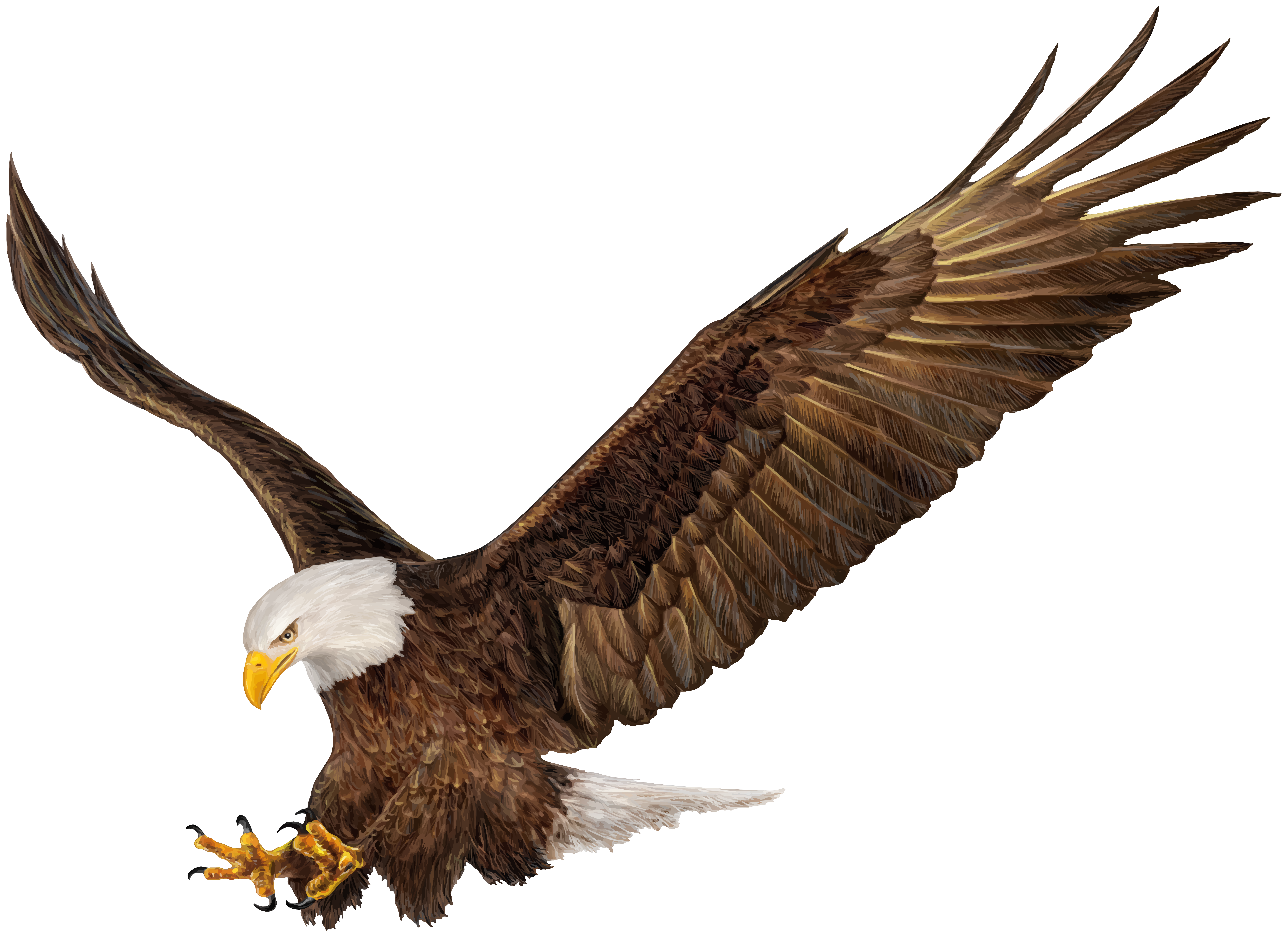 American Eagle PNG Clip Art Image.