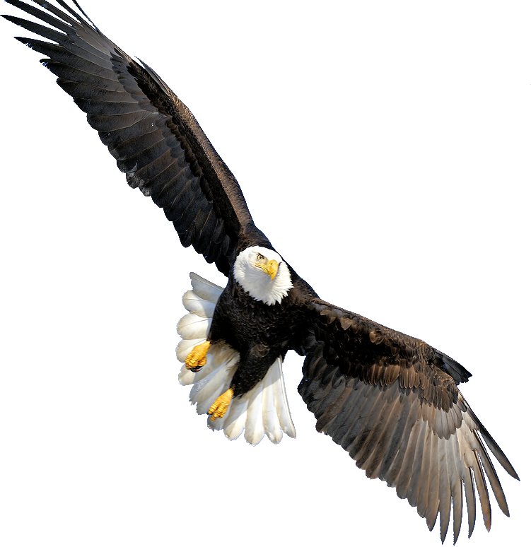 Eagle PNG Images Transparent Free Download.