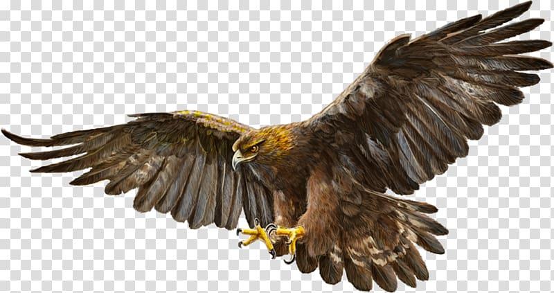 Brown hawk illustration, Bald Eagle Bird Golden eagle, eagle.
