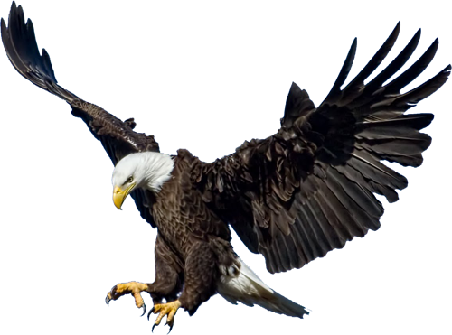Download Eagle PNG 3.