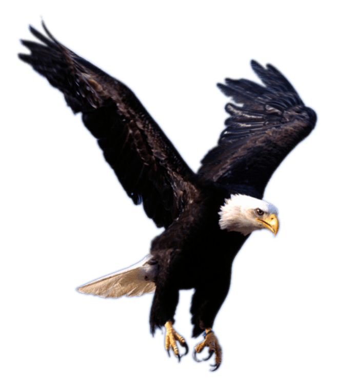 Eagle Landing transparent PNG.