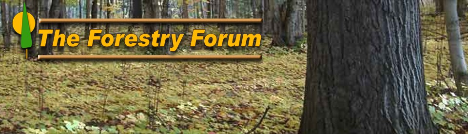 The Forestry Forum.