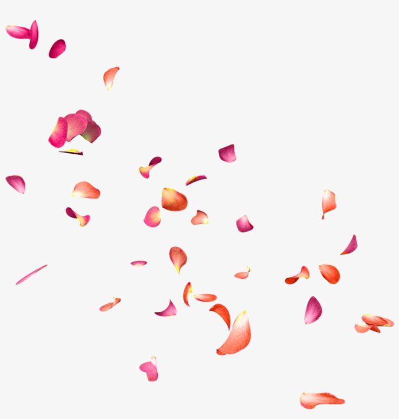 Falling Rose Petals Png.