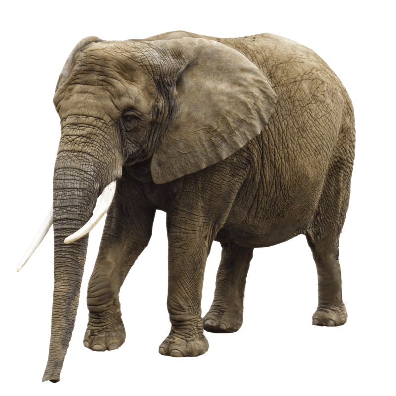 Elephant png image transparent background.