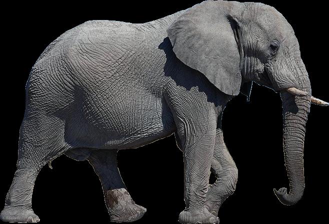 Black Elephant PNG Transparent Free Image #20.
