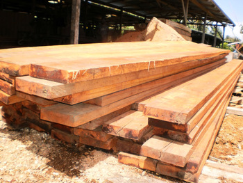 Png Government Approved Sawn Timber Export Licence.