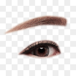 Eyebrow Png, Vector, PSD, And Clipart Wi #437595.