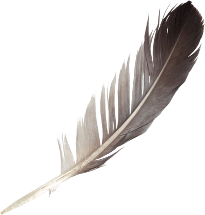 Download FEATHER Free PNG transparent image and clipart.