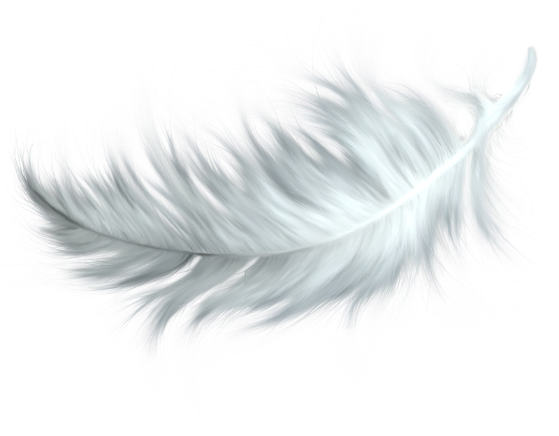 Feather HD PNG Transparent Feather HD.PNG Images..