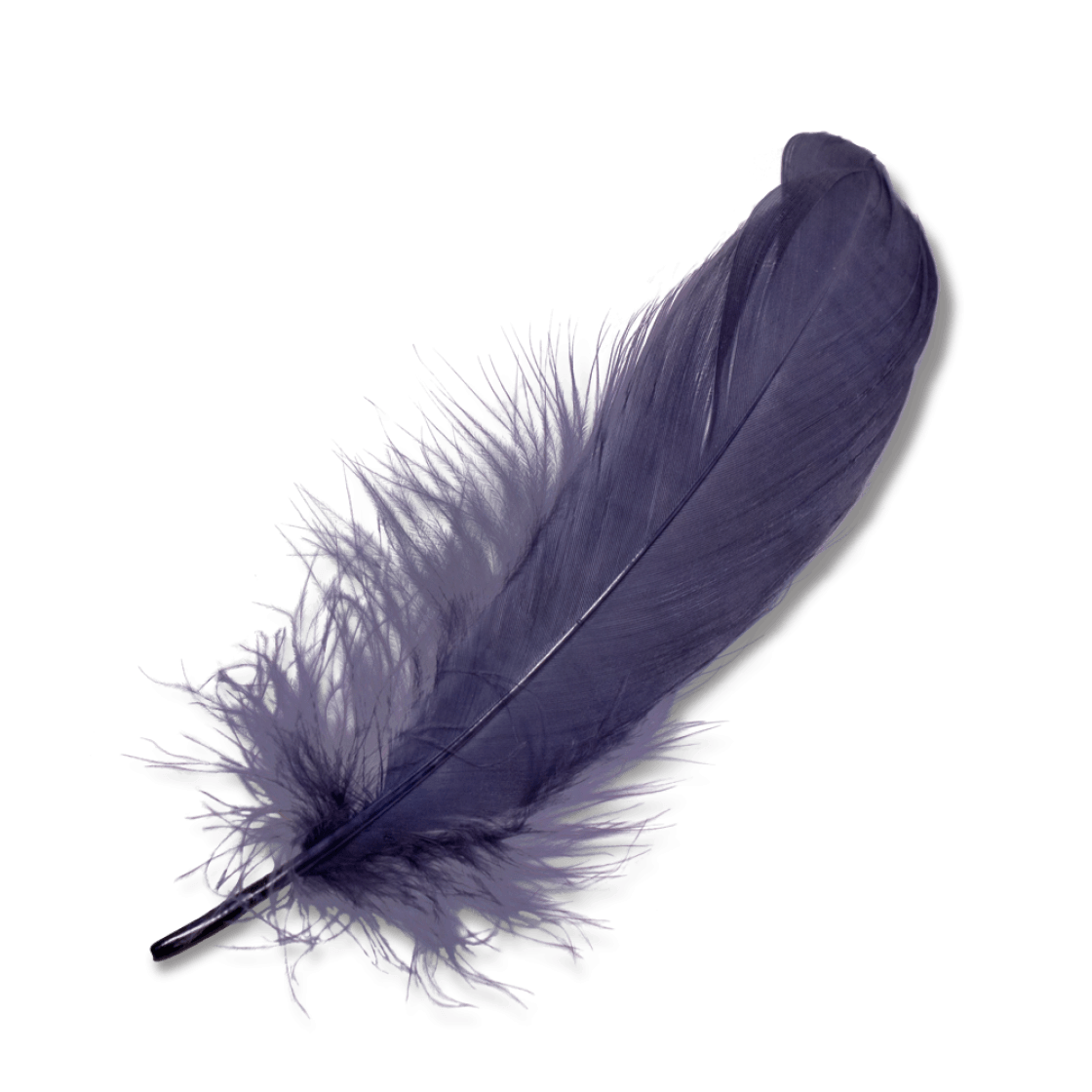 Purple Feather transparent PNG.