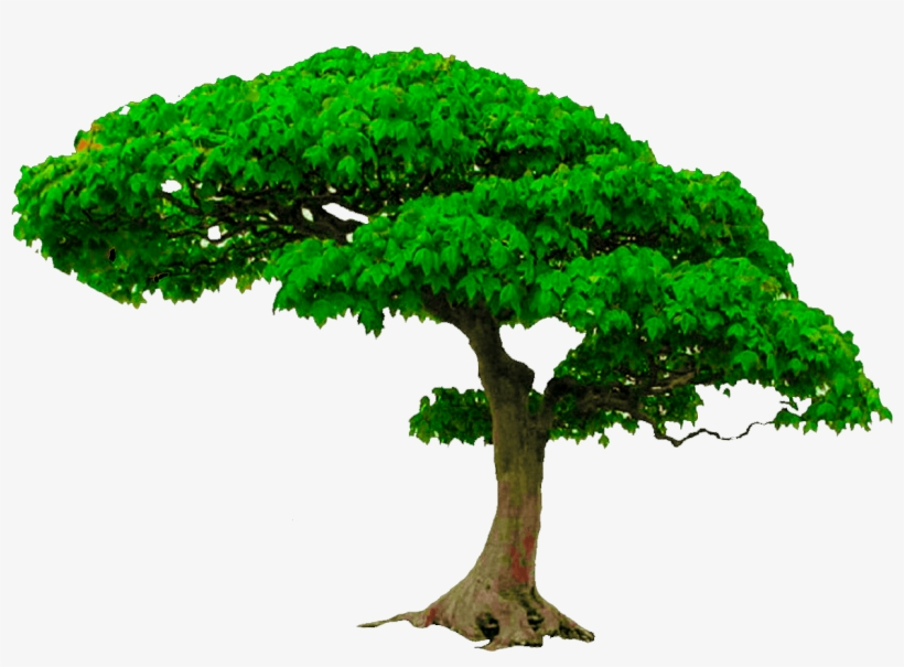 All New Tree Png Zip File, Photoshop Editing Png, Picsart.